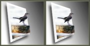 Sfx Photo Prints - Mockingbird - Gently cross your eyes and focus on the middle image Print by Brian Wallace