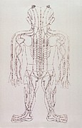 Hubert Framed Prints - Model For Acupuncture, An Engraving Framed Print by Everett