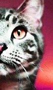 Red And White Posters - Modern Cat Art - Zebra Poster by Sharon Cummings