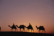 Africa-north Photos - Modern Egyptians Riding Domesticated by Gerry Ellis