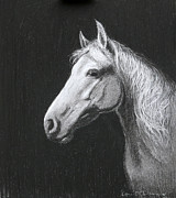 Horses Drawings - Mollie by Tomas OMaoldomhnaigh