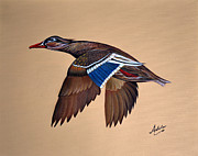 Mallard Ducks Paintings - Molly by Adele Moscaritolo