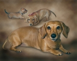 Dachshund Puppy Framed Prints - Molly Framed Print by Barbara Hymer
