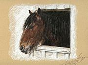 Equine Pastels Framed Prints - Molly Framed Print by Terry Kirkland Cook