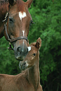 Wendy Fike Posters - Mom and Foal Poster by Wendy Fike