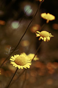 Yellow Flowers Photos - Momentum 03a by Variance Collections