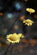 Flowers Photo Metal Prints - Momentum Metal Print by Aimelle