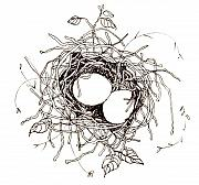 Nest Drawings - Moms Nest by Deborah Wetschensky