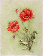 Red Poppies Drawings - Mon Espoir by Dominique Eichi