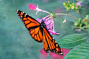 Monarch  Digital Art Framed Prints - Monarch Butterfly Framed Print by Betty LaRue