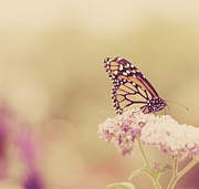 Rhode Island Posters - Monarch Butterfly With Bokeh Poster by Kristy Campbell