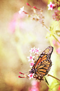 Bright Mixed Media Prints - Monarch Canvas Print by Joel Olives