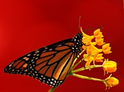 Weed Posters Art - Monarch in Red I by Irma BACKELANT GALLERIES