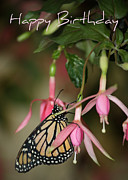 Birthday Card Prints - Monarch in the Fuchsias - Birthday Card Print by Carol Groenen