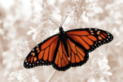 Jeannie Burleson Art - Monarch by Jeannie Burleson