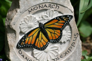 Stone Reliefs Framed Prints - Monarch Framed Print by Ken Hall