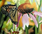 Monarch Butterfly Paintings - Monarch by Kenneth Young