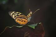 Amee Stadler - Monarch Perch