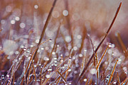 Water Drops Photos - Mondo 02 - s08c by Variance Collections