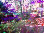 Impressionism Digital Art Prints - Monets Bridge at Garvan Gardens Print by Anne Cameron Cutri