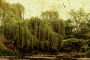 Willow Lake Digital Art Posters - Monets Garden Poster by Margaret Hormann Bfa