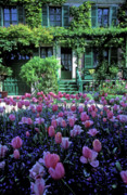 Pink Photos Prints - Monets House with Tulips Print by Kathy Yates