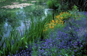 Floral Photos Posters - Monets Lily Pond Poster by Kathy Yates