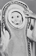 Sam Photo Prints - Monkey In A Spacesuit Print by Nasa