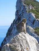 Europe Digital Art Originals - Monkey in Gibraltar by Heather Coen