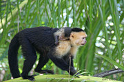 In My Life Photos - Monkey On My Back by Debra     Vatalaro