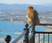 Europe Digital Art Originals - Monkey Overlooking Spain by Heather Coen