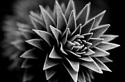 Featured Photos - Monkey Puzzle by Wenata Babkowski