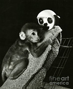 Harlow Prints - Monkey Research Print by Photo Researchers, Inc.