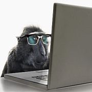 Laptop Framed Prints - Monkey Wearing Spectacles Using Laptop Computer Framed Print by Andrew Bret Wallis