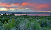 Tufa Posters - Mono Lake Overcome by Pink - California Poster by Brendan Reals