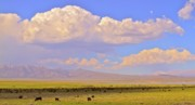 Ranch Prints - Mono Lake Rangelands Print by Gus McCrea