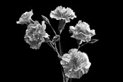 Floral Art Originals - Monochrome Spray. by Terence Davis