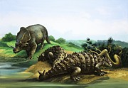 Dinosaurs Painting Posters - Monoclonius and Scolosaurus Poster by English School