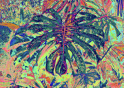 Tropical Plant Posters - Monstera - Deep Green Poster by Kerri Ligatich