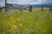 Montana Landscape Photos - Montana Essence by Idaho Scenic Images Linda Lantzy