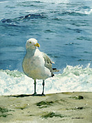 Ocean Shore Painting Posters - Montauk Gull Poster by Tom Hedderich