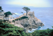 Seacoast Prints - MONTEREY CYPRUS  California seacoast seascape picture decor Print by John Samsen