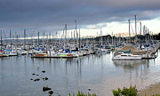 Docked Sailboats Posters - Monterey Harbor - California Poster by Brendan Reals