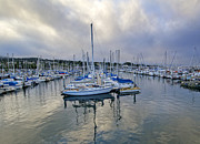 Docked Sailboats Framed Prints - Monterey Harbor Marina - California Framed Print by Brendan Reals