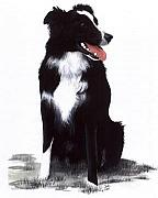 Dog Paintings - Monty by Janice M Booth