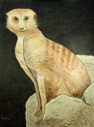 Zoo Paintings - Monty Meerkat by Scott Plaster
