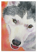 Siberian Husky Paintings - Moo by Pat St Onge