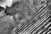 Sand Fences Art - Moods BW by JC Findley