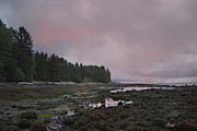 Port Renfrew Framed Prints - Moody Skies - Botanical Beach Framed Print by Marilyn Wilson