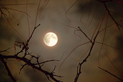 Man In The Moon Photo Metal Prints - Moon Behind Branches Metal Print by Deborah Smolinske